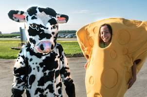 People dressed as a cow and a hunk of cheese.