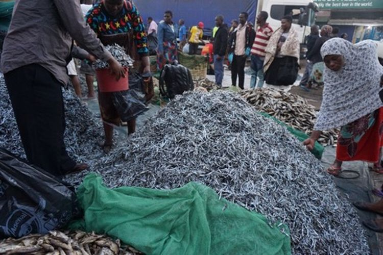 Women sorting fish from Lake Malawi. Photo by Abigail Bennett