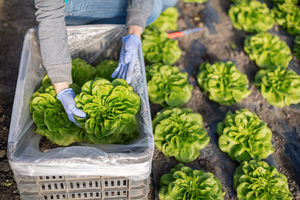 Assisting produce growers in complying with farm food safety laws