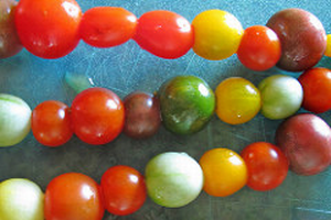 Rainbow cherry tomatoes.