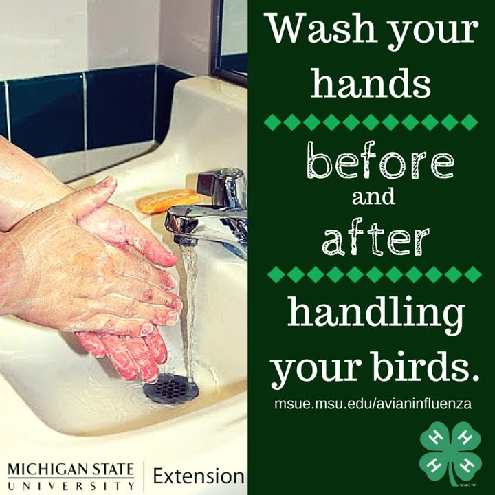 Washing hands before and after handling animals a great way to reduce the spread of disease. Photo credit: ANR Communications | MSU Extension