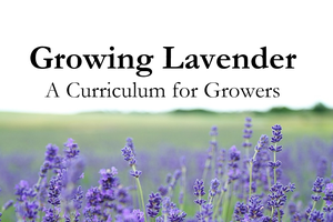 New lavender online course now available