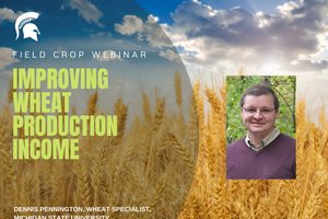Field Crops Webinar Series addresses improving wheat production income on March 1
