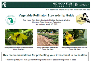 Vegetable Pollinator Stewardship Guide