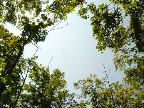 Small gap in a forest canopy to help encourage desired tree species regeneration. Photo credit: Bill Cook l MSU Extension