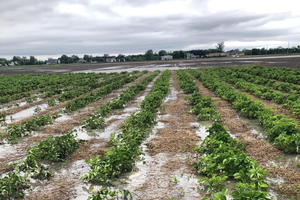 Insurance options for vegetable growers