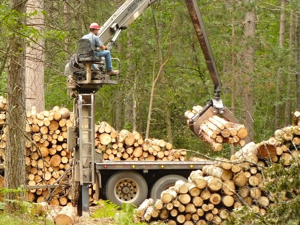 A machine picking up a pile of logs that were cut and bundled together.