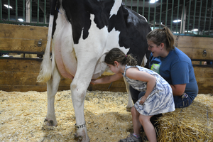 Great Dairy Adventure - girl milking cow