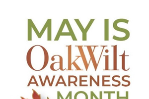Oak Wilt Awareness Month in Michigan