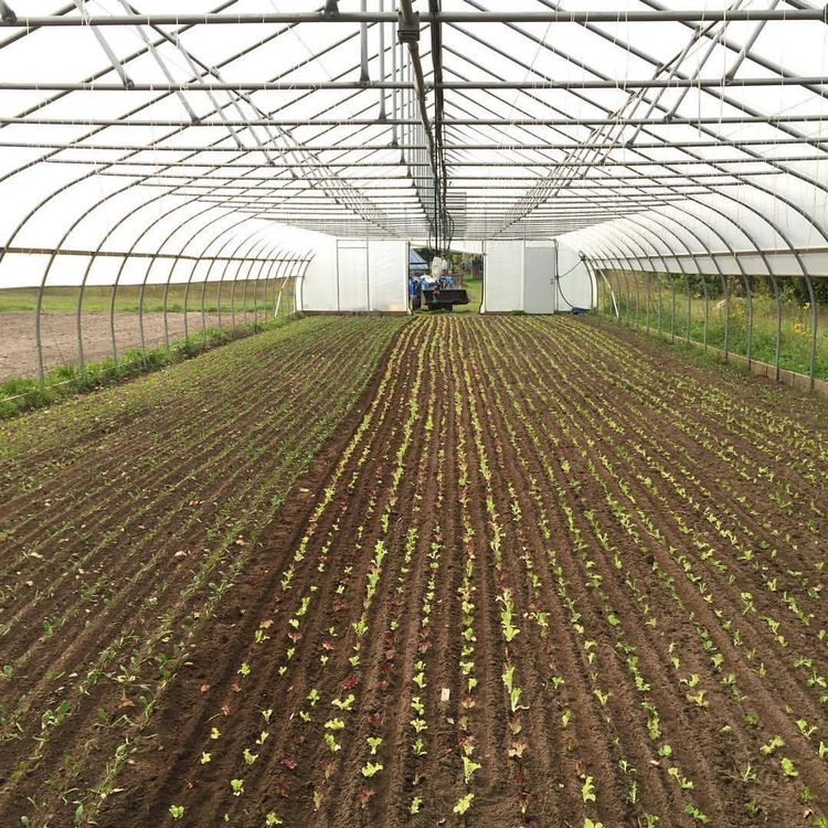 High tunnel planted to fall lettuce and spinach using the paper pot system. Photo courtesy of Presque Isle Farm.