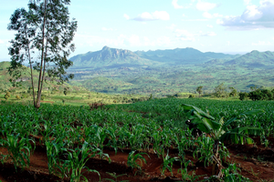MSU awarded $7.8 million grant to promote agricultural transformation in Malawi