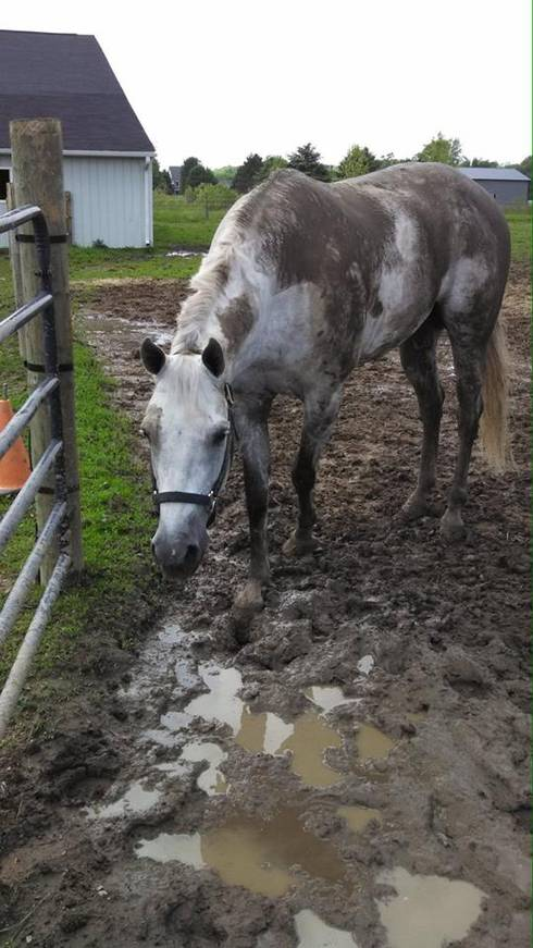 Managing The Mud At Your Horse Farm Msu Extension