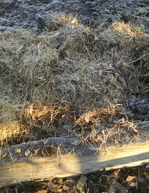 Use shredded leaves raked from your lawn to cover vegetable gardens or beds. Photo: Rebecca Krans, MSU Extension.