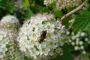 Supporting bees and other pollinators on your farm