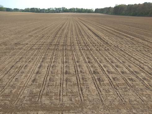 Field planted
