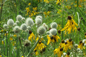 Native plants provide a smart solution for your gardening challenges