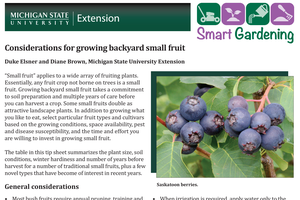 Considerations for growing backyard small fruit
