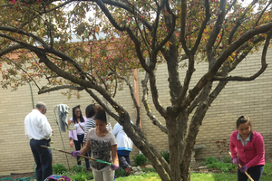 STEAM in Action: School gardens