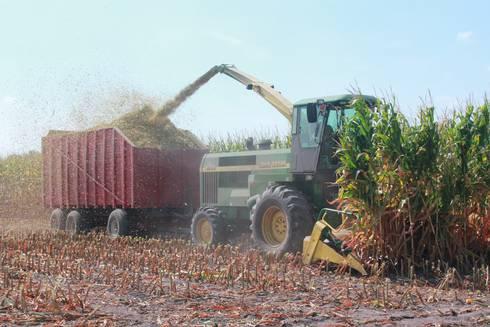 Corn silage harvested for forage