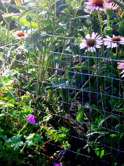 Yard And Garden From Deer Rabbits, How To Keep Deer And Rabbits Out Of Vegetable Garden
