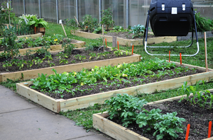 Choosing the right crops for your garden