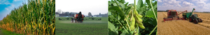Collage of field crop photos
