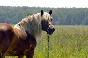 Insulin resistance in horses