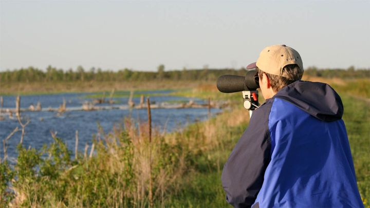 Birders enjoy wetland habitats of Tuttle Marsh during the annual Tawas Point Birding Festival. Photo credit: Michigan Sea Grant