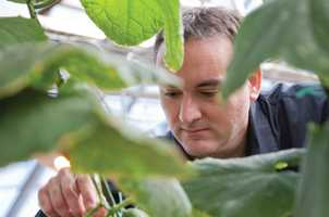 Adapting human medical technology to predict plant diseases