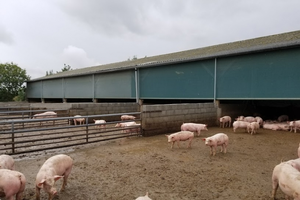 French pig farm.