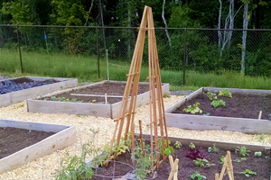 Vegetable gardening techniques to help improve or start your urban or community garden