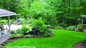 Selection, planting and care of trees and shrubs to avoid the need for pesticides