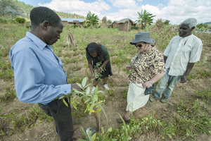 Improving soil health key to productivity, sustainability for African farmers