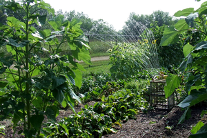 Smart watering in the vegetable garden