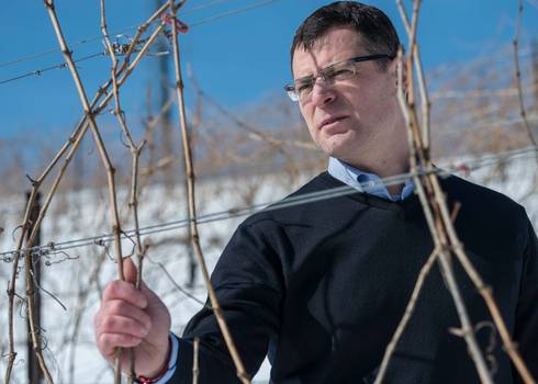 Paolo Sabbatini, MSU professor of horticulture, examines the effects of winter weather on Michigan grapevines
