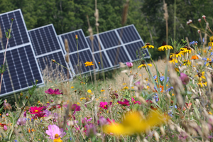 Solar array with pollinator-attractive plants