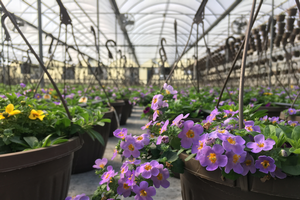 Southwest Michigan greenhouse situation report – April 2019