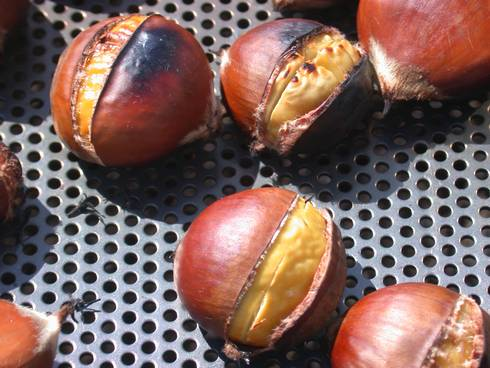 Thanks to Fulbright's work, Michigan chestnuts are a rising crop.