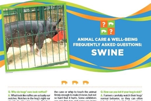 Poster with information on swine.