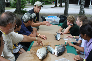 Michigan Sea Grant Extension educator Dan O'Keefe explains how to fillet a fish to campers at the 4-H Great Lakes and Natural Resources Camp. Photo: Michigan Sea Grant