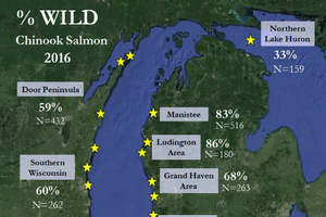 Salmon Ambassador volunteers had mixed success for Chinook salmon in 2016 on Lake Michigan
