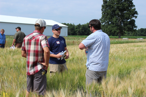 Multiple opportunities exist to engage with malting barley research in Michigan in June. | Photo by Ashley McFarland