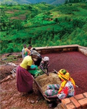 Farm-level Coffee Processing in Rural Rwanda