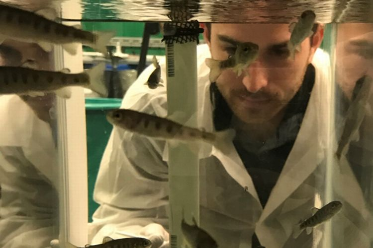 Christopher Knupp, a doctoral student in the MSU Aquatic Animal Disease Ecology Program, examines fish in a tank. This photo was taken before the novel coronavirus pandemic. Photo courtesy of Thomas Loch.