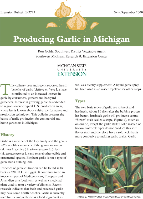 Producing Garlic In Michigan E2722 Msu Extension