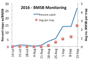 Nymphs and summer generation adults are moving into orchards in southwest and fruit ridge regions. Line indicates percent traps that caught any BMSB in a given week overall; squares indicate average number of nymphs and adults captured each week.