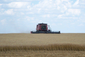 Economic considerations of replacing existing wheat with corn or soybeans