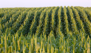Jim Hilker: Crop Market Outlook for 2019-2020
