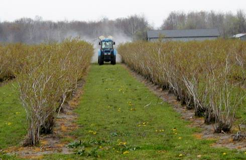 Airblast tower sprayer applying an early season spray in blueberries.