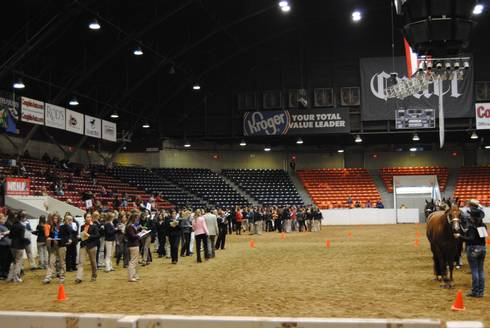 How To Start A 4 H Horse Judging Team Msu Extension